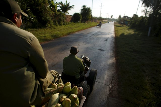 Farmer Wilber Sanchez (R), 30, drives a tractor near San Antonio de los Banos, carrying corn to be sold to small shops, on the highway in Artemjsa province, Cuba, April 13, 2016. (Photo by Alexandre Meneghini/Reuters)