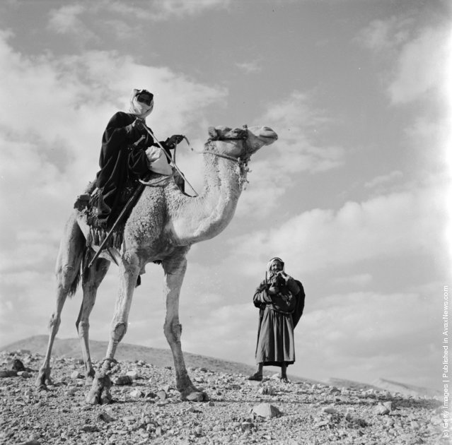 1950: Two male Bedouins in an Arabian desert with a camel which one of them sits on