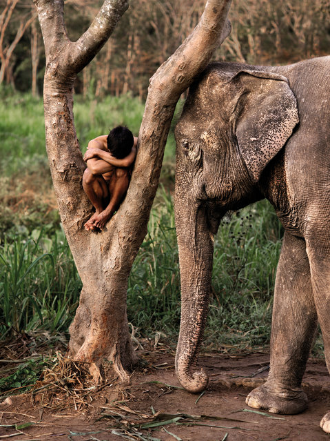 """The legendary US photographer's favourite shots of creatures and how they interact with humans feature in """"Animals"""", his latest book. Here: A mahout and his elephant at a sanctuary, Chiang Mai, Thailand, 2010. (Photo by Steve McCurry/The Guardian)"""