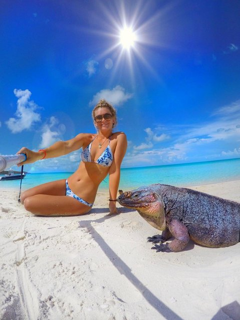 """Dublin student beat depression by befriending sharks, stingrays and pigs in the Bahamas. Awesome underwater pictures show the 23-year-old diver cosying up to a range of animals including turtles, stingray and sharks. The sunny selfies were taken in the Bahamas by Stuart's Cove dive instructor and native of the island, Amelia Klonaris – who beat depression by embracing her incredible beach paradise lifestyle. """"I love capturing moments and being able to look back on them"""", she said. """"I love all types of photography, mostly underwater or anywhere on the water. Being underwater is like being in a whole different world. It's very peaceful and you interact with some pretty cool animals"""". But all has not been plain sailing for beach babe Amelia. She revealed how she faced tough times while studying business in Trinity College, Dublin before learning to become a dive guide. """"When I was in high school I never was good in school but I went on to college"""", said Amelia. """"I had this idea in my head that I was supposed to go into business just like all my friends were doing. I became super depressed and went through a hard time. But then I moved back home and started all of my diving courses. I went on to becoming and instructor. I am finally doing what I love and I am the happiest I've ever been. My message for young people would be to find your niche and do what you love. Life is too short to be unhappy"""". (Photo by Amelia Klonaris/Mediadrumworld)"""