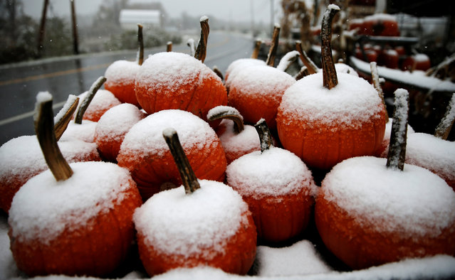 Pumpkins for sale sit in falling snow near Port Ewen, New York, U.S., as the first winter weather of the season moved into parts of the northeast U.S., October 27, 2016. (Photo by Mike Segar/Reuters)