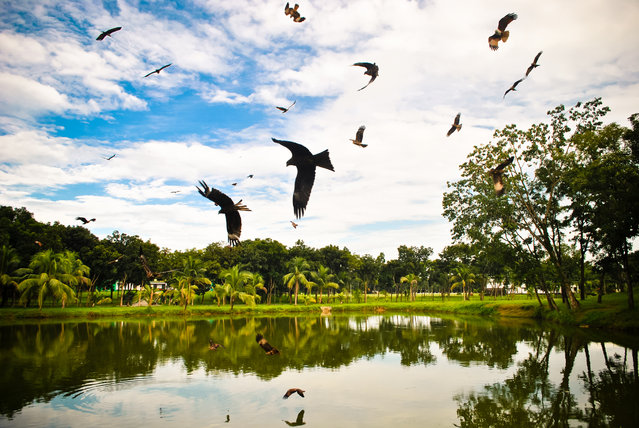 #10. Bangladesh, Total GDP: USD 221.4 billion (2016). Contribution of Travel and Tourism to GDP: 4.3%. Here: Brahmani kites flying over a pond looking for prey. (Photo by Rez Click/Getty Images)