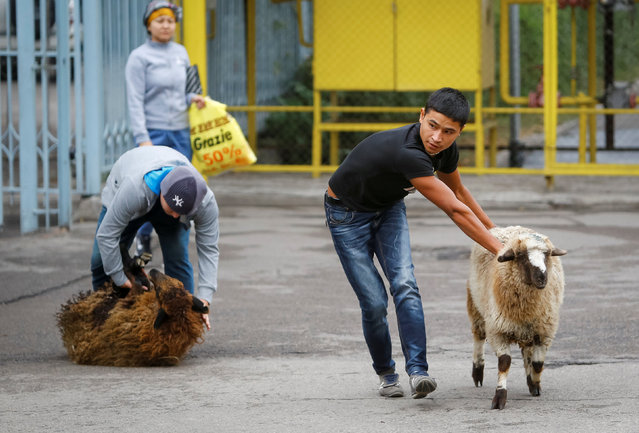 Men lead sheep for slaughtering to mark Kurban-Ait, also known as Eid al-Adha, in the Central Mosque in Almaty, Kazakhstan, September 12, 2016. (Photo by Shamil Zhumatov/Reuters)