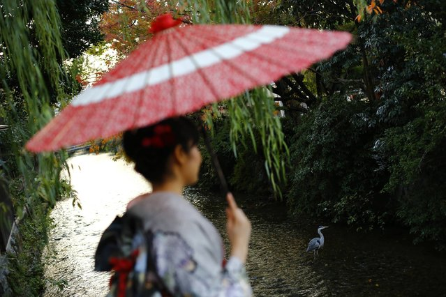 A woman, dressed in a traditional Japanese kimono, holds a parasol as she looks at a water bird while crossing a bridge in Kyoto, western Japan November 19, 2014. (Photo by Thomas Peter/Reuters)