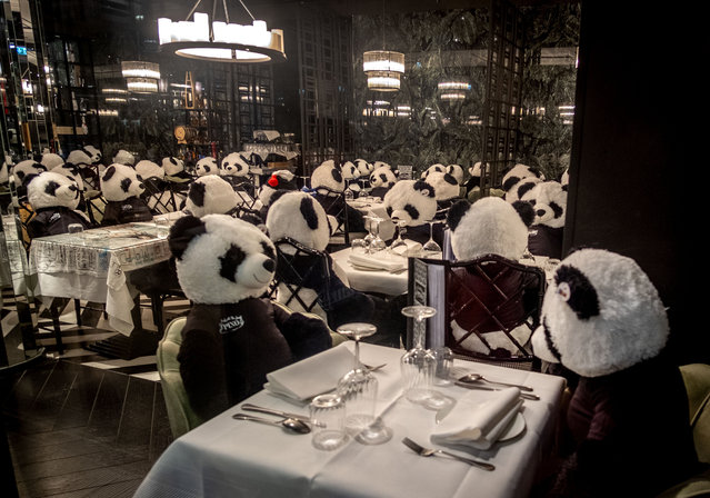 The owner of a closed restaurant has placed plush panda bears at the tables in central Frankfurt, Germany, Tuesday, February 23, 2021, as Germany is still in a partiallockdown. (Photo by Michael Probst/AP Photo)