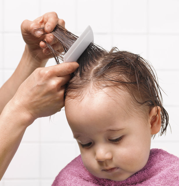 Combing for head lice. (Photo by Peter Dazeley/Getty Images)