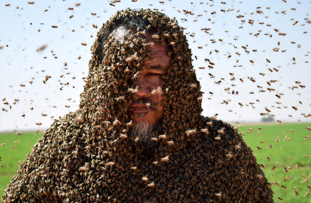 A Saudi man with his body covered with bees poses for a picture in Tabuk, Saudi Arabia September 11, 2018. (Photo by Mohamed Al Hwaity/Reuters)