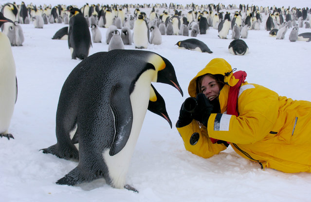 Dafna Ben Nun with the Emperor penguins. (Photo by Dafna Ben Nun/Caters News)