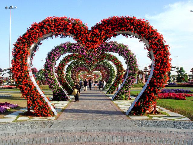 The Dubai Miracle Garden