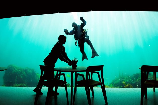 A worker prepares the dining tables as a diver cleans the outside of a viewing window of Under, a restaurant that is semi-submerged beneath the waters of the North Sea on May 2, 2019 in Lindesnes near Kristiansand, some 400 km south west of Oslo. Under, a new restaurant that opened a few weeks ago in Lindesnes, serves up Poseiden's delicacies with a unique view, in an architectural showpiece that stretches five meters (15 feet) underwater. The restaurant is a 34-metre monolith designed by Norwegian firm Snohetta, known for its celebrated buildings such as the Oslo Opera and the 9/11 Memorial Pavilion in New York. (Photo by Jonathan Nackstrand/AFP Photo)