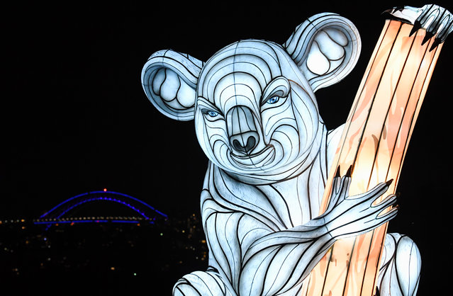 A koala lantern sculpture is illuminated with the city in the background during the media preview of Vivid Sydney at Taronga Zoo on May 19, 2019 in Sydney, Australia. (Photo by James D. Morgan/Getty Images)