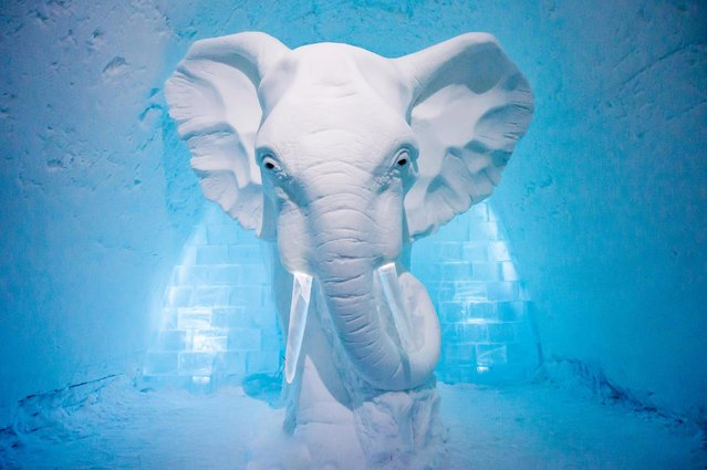 This year a Swedish artist made a giant snow elephant in one room. (Photo by Icehotel.com/Exclusivepix Media)