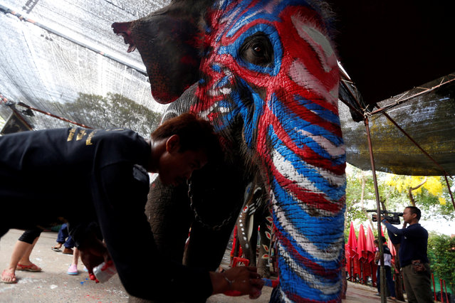 A Thai mahout paints an elephant in celebration of the Songkran water festival in Ayutthaya province, north of Bangkok, Thailand April 11, 2017. (Photo by Chaiwat Subprasom/Reuters)