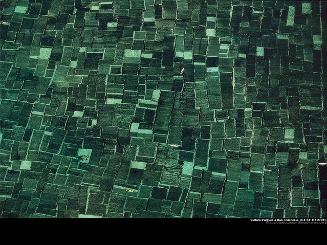 Amazing Photos by Yann Arthus-Bertrand. Part Two