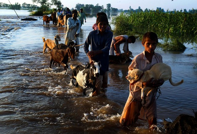 People wade through floodwaters with their livestock as they move to a safe place following heavy rains in Jafar Kot, Pakistan, on September 7, 2014. Heavy monsoon rains and flash floods have killed more than 120 people in Pakistan, as forecasters warned of more rain in the coming days and troops raced to evacuate people from deluged areas. (Photo by K .M. Chaudary/AP Photo)
