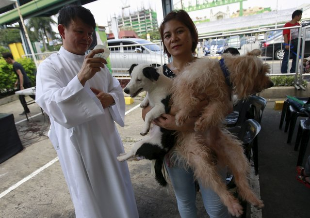 Xander Carandang, a Catholic priest, sprinkles holy water on a woman and her pets during a pet blessing at the Greenhills shopping mall in Manila October 3, 2015. Pets were blessed on Saturday in a celebration honouring the patron saint of animals Saint Francis of Assisi. (Photo by Romeo Ranoco/Reuters)