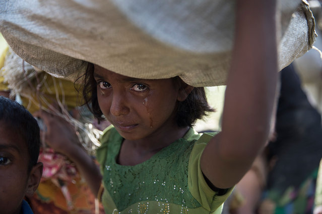 A Rohingya girl cries as refugees fleeing from Myanmar cross a stream in the hot sun on a muddy rice field near Palang Khali, Cox's Bazar, Bangladesh on October 16, 2017. Well over a half a million Rohingya refugees have fled into Bangladesh since late August during the outbreak of violence in Rakhine state causing a humanitarian crisis in the region with continued challenges for aid agencies. (Photo by Paula Bronstein/Getty Images)