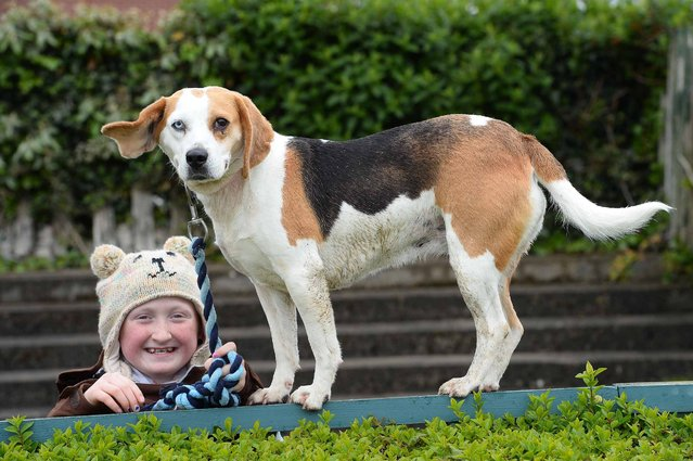 """Abbi Troy aged 12 from Knocknagree Co Cork and her dog Mollz arrive for the Dog Show, pictured  at the """"Kingdom County Fair"""" held in Ballybeggan race course in Tralee Co Kerry, Ireland yest. (Photo by Domnick Walsh/Eye Focus)"""
