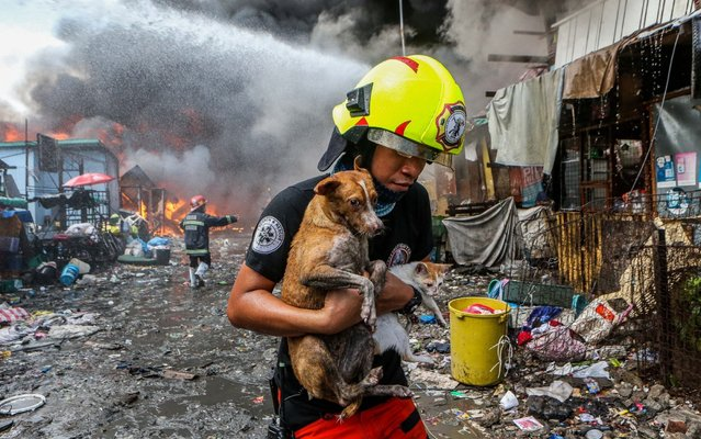 A firefighter carries a dog and a cat saved from a fire engulfing a slum area in Manila, the Philippines, April 18, 2020. Hundreds of families here were displaced Saturday due to the fire. (Photo by Xinhua News Agency/Rex Features/Shutterstock)