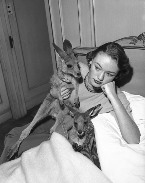 """Loretta North of Australia, who recently won the title of """"Miss Kangaroo"""", pays special attention to the lucky animals in her suite at the Waldorf Astoria in New York, January 10, 1952. Loretta came to the U.S. accompanied by the two kangaroos, Matilda, wrapped in blanket and Joey-Roo. Matilda took ill while in Washington, D.C. and was ordered to bed by Loretta. (Photo by AP Photo)"""