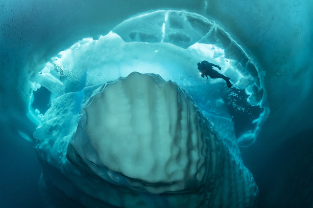 These incredible shots show the stunning formations of an iceberg beneath the surface of the ocean. Taken in Tasiilaq, Greenland, by Franco Banfi, the underwater photography captures the beauty of these ice mountains beneath the ocean's surface. In some of the photos, divers are swimming around an iceberg under the frozen water, while other images show some of the weird and wonderful creatures you can encounter in that part of the ocean. (Photo by Franco Banfi/Caters News Agency)