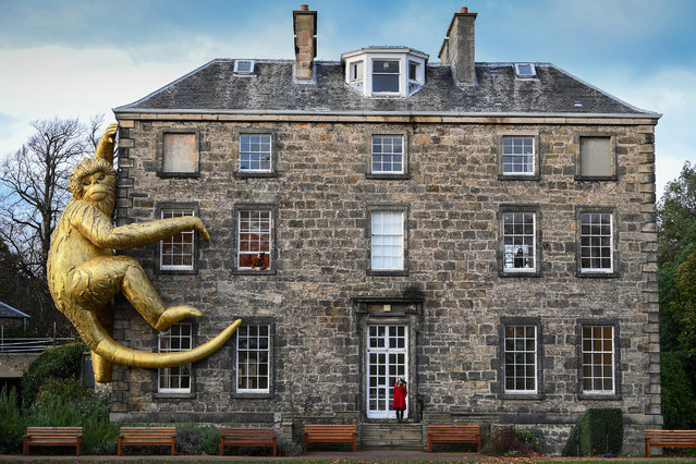 Members of the public view a 45ft tall giant golden monkey on the side of Inverleith house on November 04, 2020 in Edinburgh, Scotland. The inflatable Golden Monkey installation, by Australian ecological artist Lisa Roet, has previously adorned scaled skyscrapers in Beijing and Hong Kong. (Photo by Jeff J. Mitchell/Getty Images)