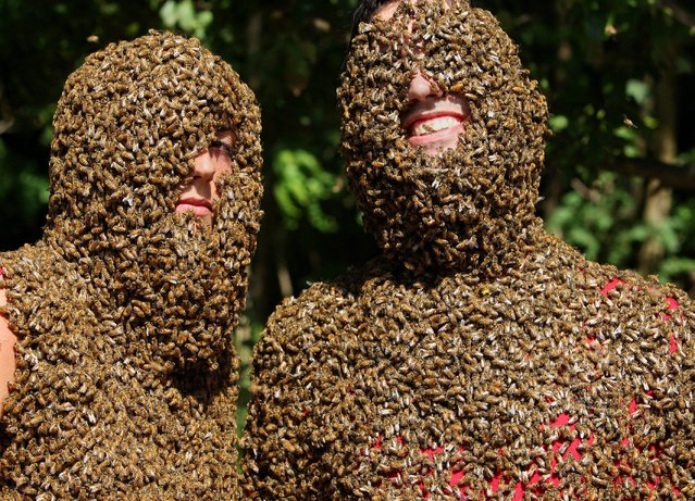 Marenda Schipper and Patrick Boelsterli show of their bee beards at an annual competition at Clovermead Adventure Farm, Saturday August 10, 2013 in Aylmer, Ontario, Canada. (Photo by Dave Chidley/AP Photo/The Canadian Press)