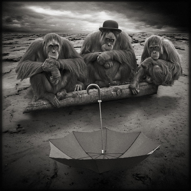 """""""Once the umbrella appears..."""" (Photo and caption by Yves Lecoq)"""