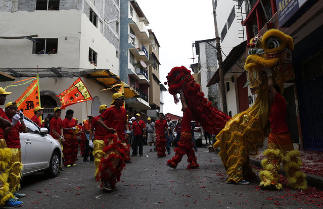 Dancers perform a lion dance outside a local shop during celebrations of the Chinese Lunar New Year of the Monkey in Chinatown in Panama City, Panama, February 8, 2016. (Photo by Carlos Jasso/Reuters)