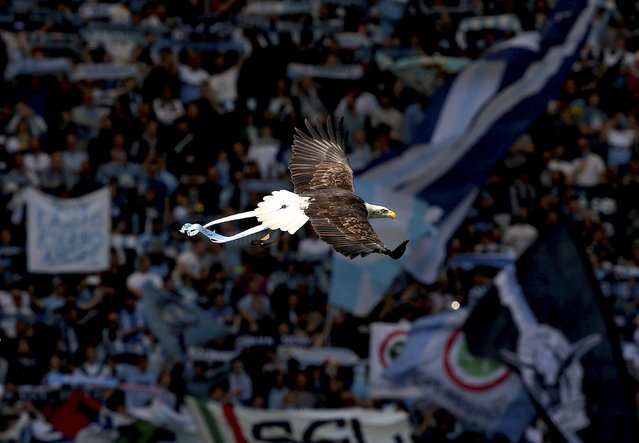 Lazio's mascot, a white headed eagle called Olimpia, flies before the start of their Italian Serie A soccer match against Empoli at the Olympic stadium in Rome April 12, 2015. (Photo by Alessandro Bianchi/Reuters)