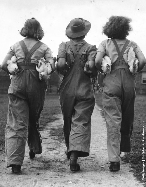 Firmly clutching some chickens under their arms three land army girls turn their backs on the camera, 1940