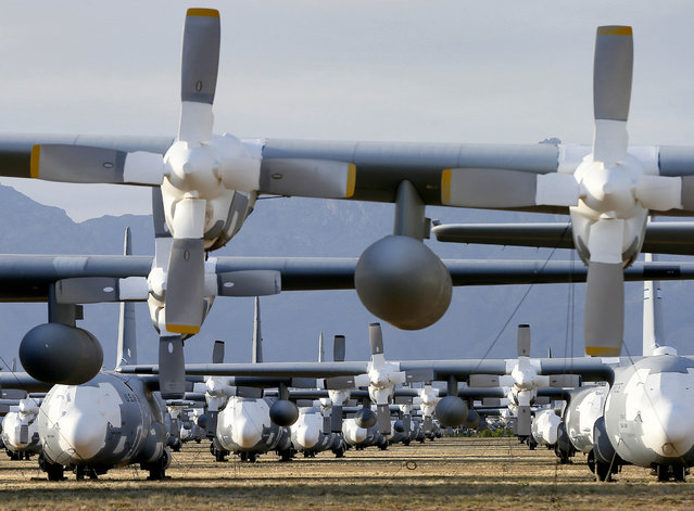 C-130 Hercules cargo planes are lined up in a field at the 309th Aerospace Maintenance and Regeneration Group boneyard at Davis-Monthan Air Force Base in Tucson, Ariz. on Thursday, May 14, 2015. Over 2,300 variants of the C-130 have been produced since 1954. (Photo by Matt York/AP Photo)