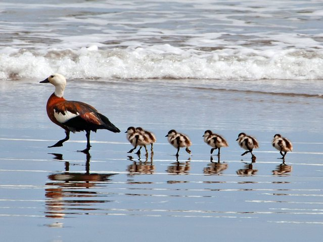 """""""All mothers are working mothers"""". – Anon. (Photo by Creative Commons)"""