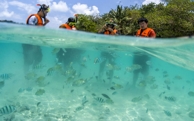Tourists prepare to snorkel at a beach at Rang island near Kut island, eastern Thailand, April 24, 2014. (Photo by Athit Perawongmetha/Reuters)