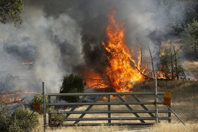 Fire erupts behind a gate during the so-called Jerusalem Fire in Lake County, California, August 12, 2015. (Photo by Robert Galbraith/Reuters)