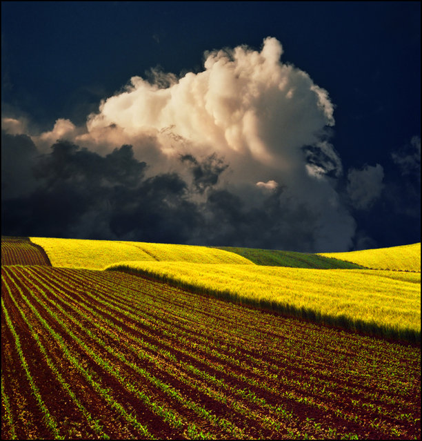 Yellow field – Serbia inspired.:)