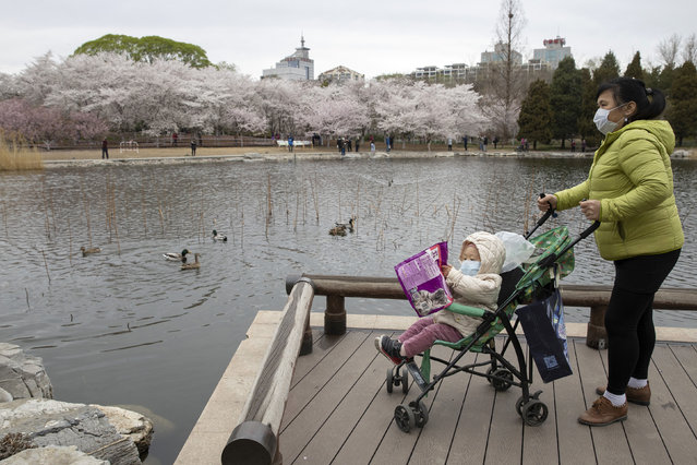 A woman pushes a child on a pram across from cherry blossoms at the Yuyuantan Park in Beijing on Thursday, March 26, 2020. While many of the city's world-famous tourist sites, including the sprawling Forbidden City ancient palace complex, remain closed, spring weather and budding cherry blossoms are coaxing outdoors citizens who have been largely confined to home for the last two months. (Photo by Ng Han Guan/AP Photo)
