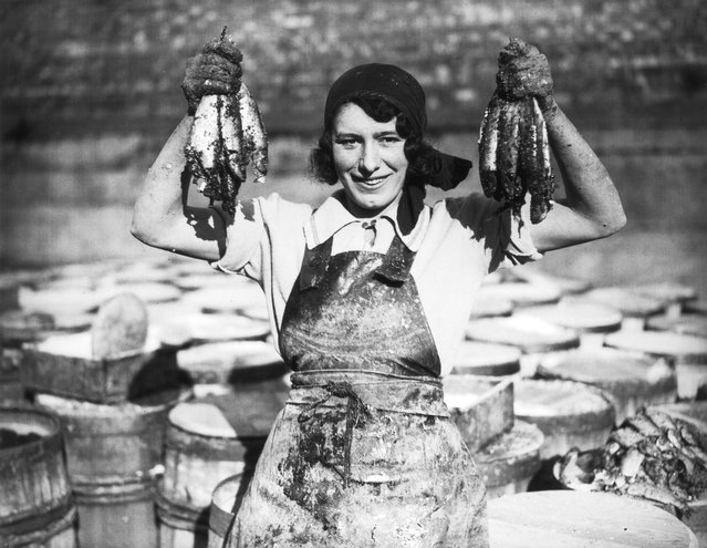 A young woman at Great Yarmouth working during the herring harvest. 18th October 1932. (Photo by Fox Photos)