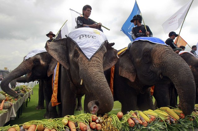 Elephants eat fruit and vegetables during the 2014 King's Cup Elephant Polo Tournament in Samut Prakan province, on the outskirts of Bangkok August 28, 2014. A total of 16 international teams and 51 Thai elephants are participating in the tournament that runs from August 28-31. (Photo by Chaiwat Subprasom/Reuters)