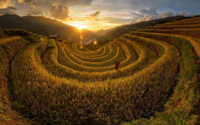 Lush green rice terraces sprawl over 2,200 hectares of mountainside ready to be harvested. These stunning images, captured by photographer Saravut Whanset, show the incredible terraces throughout the course of the day, including at sunrise and sunset. Workers tend to the fields, with each terrace between 1 and 1.5 metres wide, while wooden huts stand on stilts on the mountainside. The beautiful panoramic pictures were taken in Mu Cang Chai, Vietnam, with the fields located at the foot of the Hoang Lien Son mountain range, 1,000 metres above sea level. (Photo by Saravut Whanset/Solent News and Photo Agency)