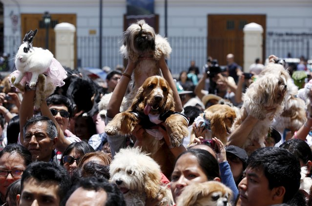 Owners holding their pets attend a religious and blessing ceremony outside the San Francisco church in Lima, October 4, 2015. (Photo by Mariana Bazo/Reuters)