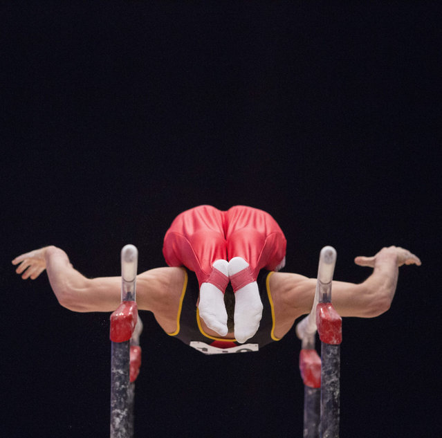 Maxime Gentges of Belgium performs on the Parallel Bars at the 46th FIG Artistic Gymnastics World Championships in Glasgow, Britain, 25 October 2015. (Photo by Robert Perry/EPA)