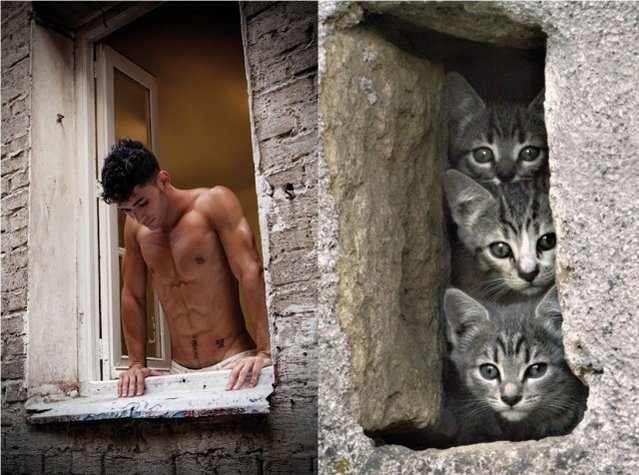 Hot Guys and Cats Striking Part2