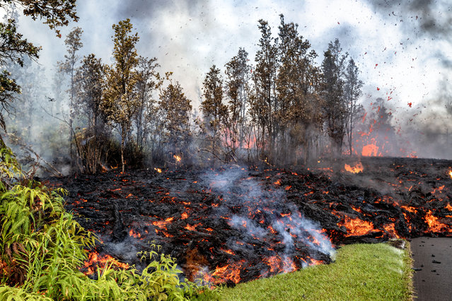 As it advances, lava engulfs the natural surroundings. (Photo by CJ Kale/Caters News Agency)