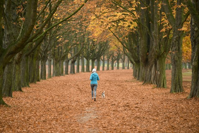 A woman joggs with her dog through a  forest near Cologe, Germany Friday November 4, 2016. (Photo by Henning Kaiser/DPA via AP Photo)