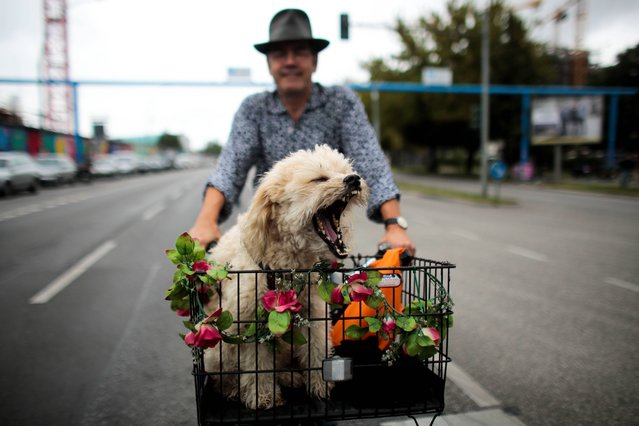 In this picture made available Wednesday, September 4, 2013, a man, name not given, rides his bike with his dog Django, in a basket through  Berlin, Germany, Tuesday, September 3, 2013. (Photo by Markus Schreiber/AP Photo)