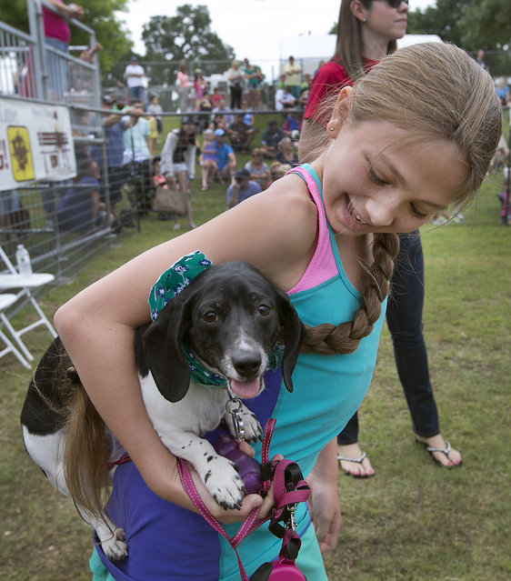 McKenzi Popper, 11, celebrates with her dog Remy after he won his race to advance to the quarerfinals. The 18th Annual Buda County Fair and Weiner Dog Races was held at city park in Buda Sunday April 26, 2015 sponsored by the Lions Club. (Photo by Ralph Barrera/Austin American-Statesman)