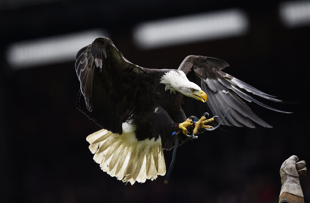 Football Soccer, Crystal Palace vs Leicester City, Barclays Premier League, Selhurst Park, United Kingdom on March 19, 2016: Crystal Palace eagle before the game. (Photo by Dylan Martinez/Reuters/Livepic)