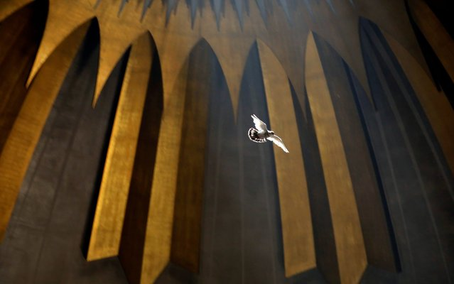 A dove flies inside the Church of the Holy Sepulchre during the Christian Orthodox Holy Fire ceremony in Jerusalem's Old City, April 27, 2019. (Photo by Amir Cohen/Reuters)