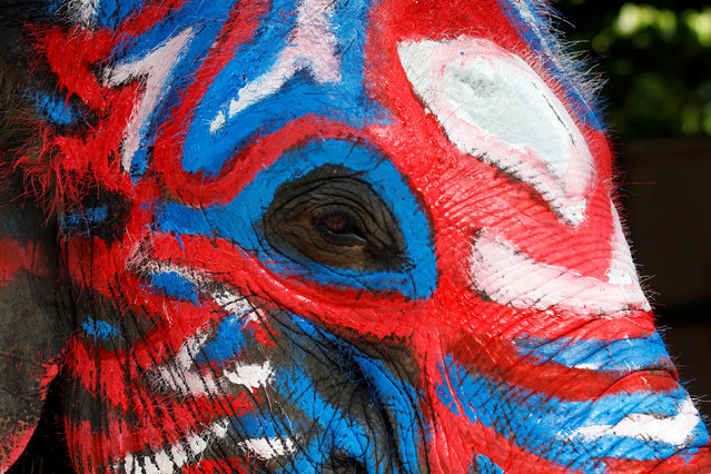 An elephant is painted in celebration of the Songkran water festival in Ayutthaya province, north of Bangkok, Thailand April 11, 2017. (Photo by Chaiwat Subprasom/Reuters)